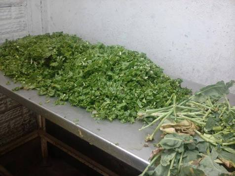 Vegetables being prepared for inmates